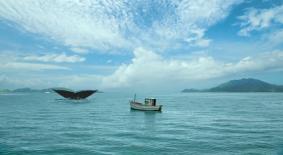 OK GO, Netflix and Vauxhall featured image