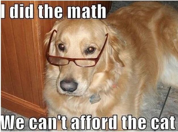 Hey, look! A funny dog meme.